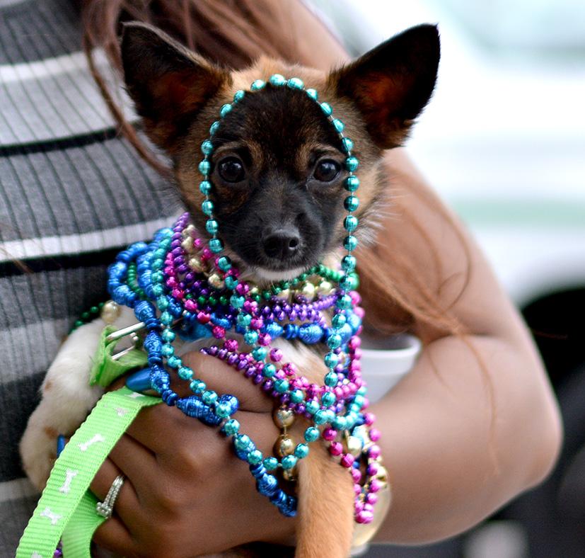 paradedog